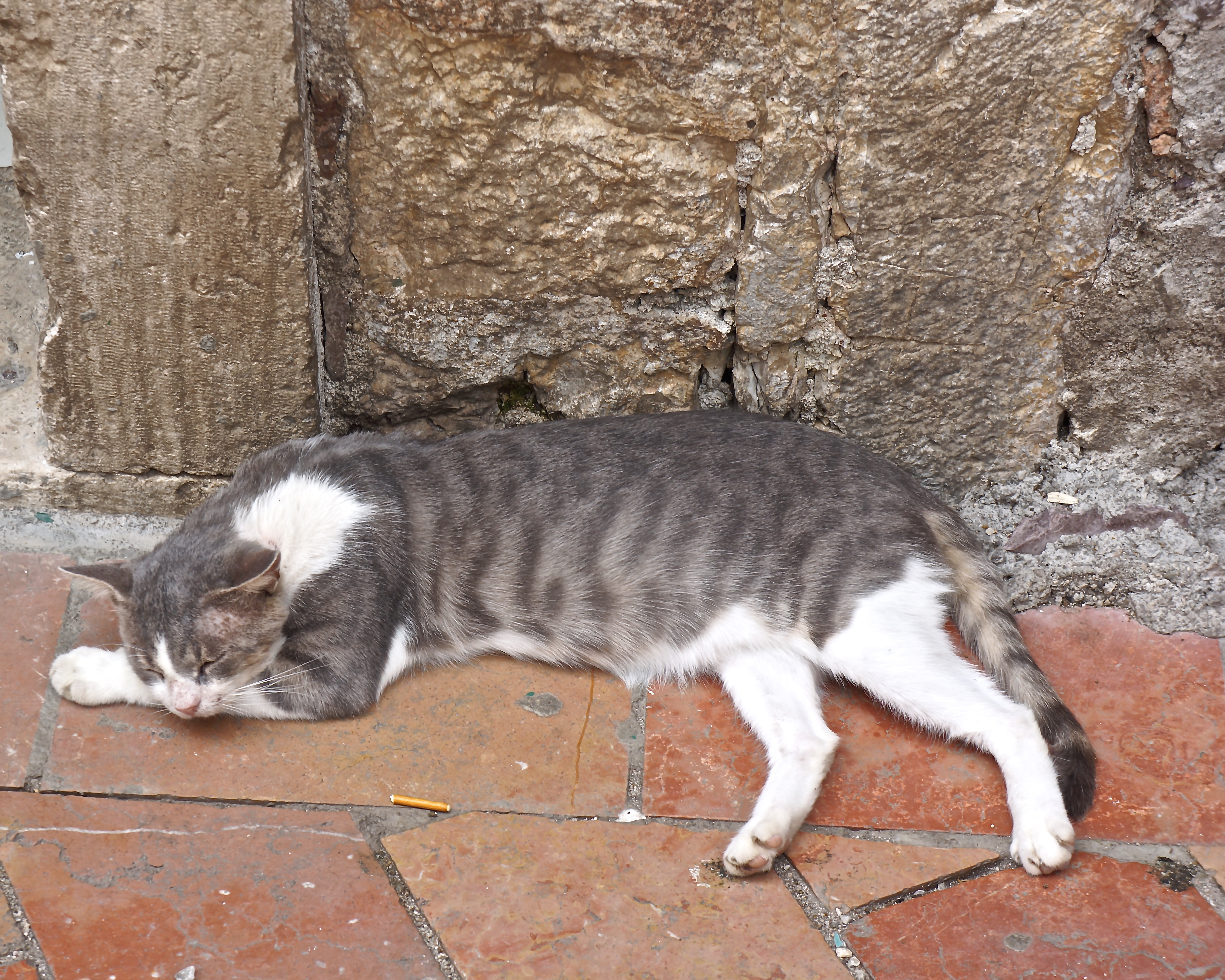Cats are common residents of every ancient city in Croatia, and they appear to be quite unimpressed by the visiting crowds of tourists.